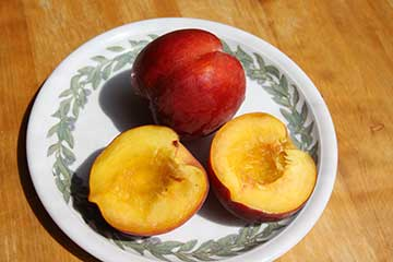 Früchte des Pfirsichs Redhaven