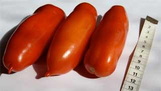 "Tomatensorte ""San Marzano"""
