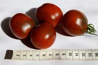 "Tomatensorte ""Schwarze Pflaume"""
