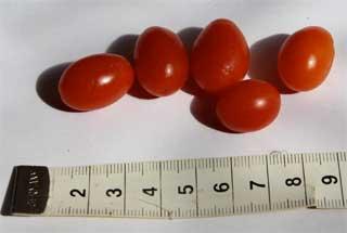 """Datteltomate """"Small Eggs"""""""