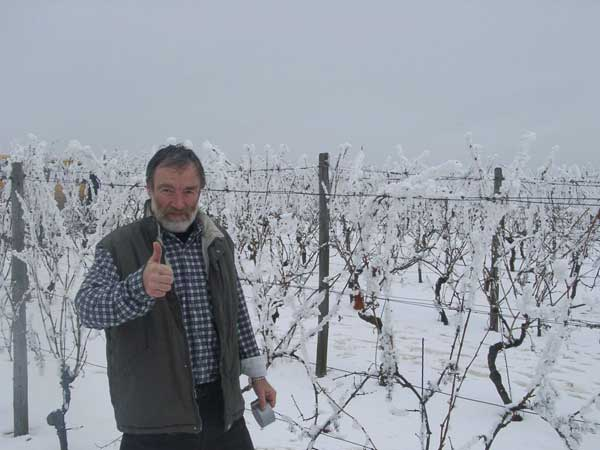 The vineyards in the snow