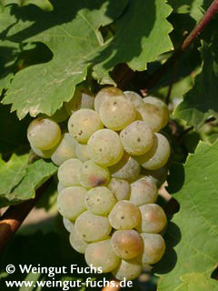 Riesling white wine
