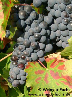 Pinot Meunier red wine